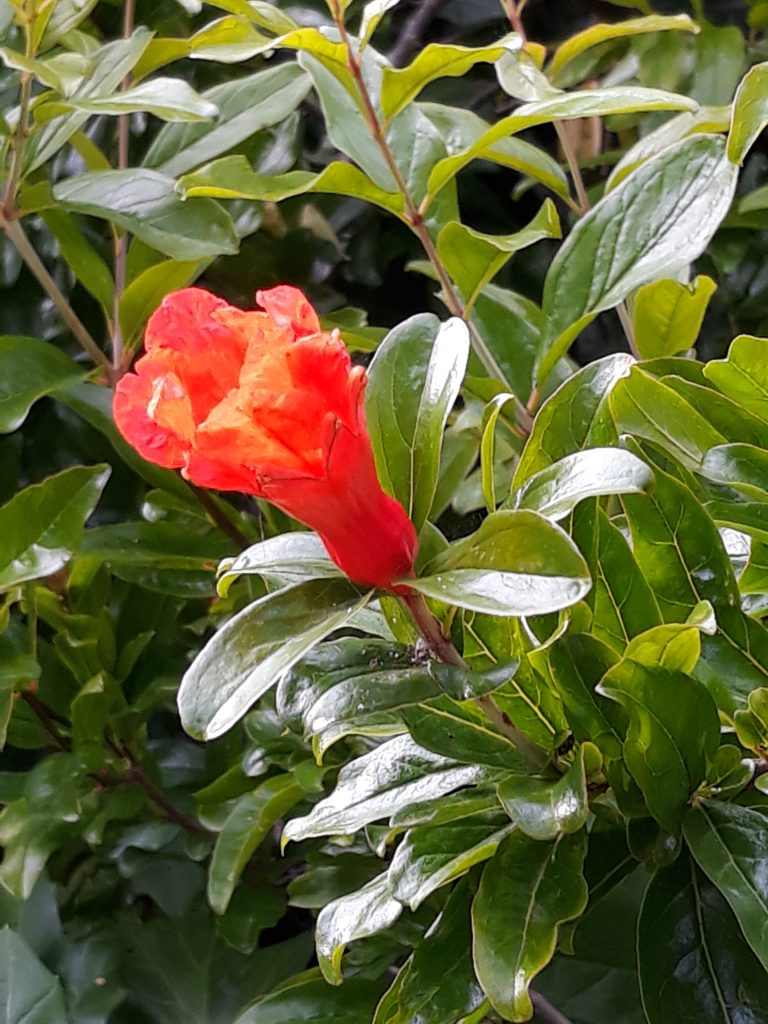 Fleur et feuillage vert