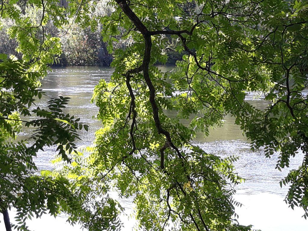 Branches d'arbre au dessus de l'eau
